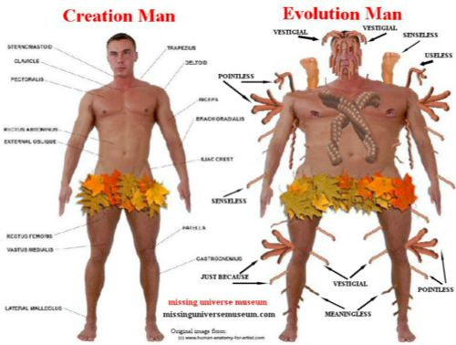 Evolution of mankind essay definition
