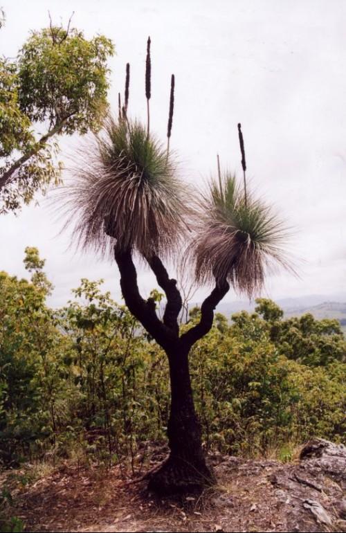 botanical wednesday  is everything weird in australia