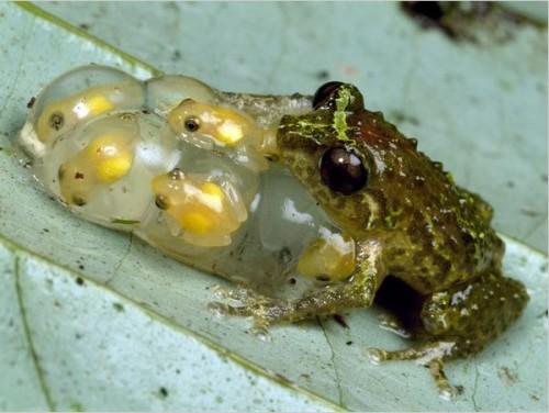 froglets-500x376.jpg