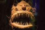 uglyfish