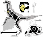 eosinopteryx