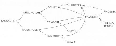 cowpedigree