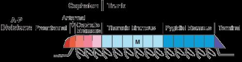 trilobiteseg