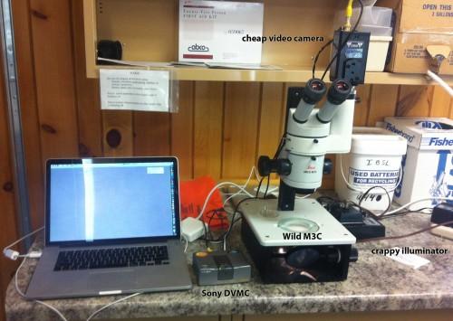 videomicroscope