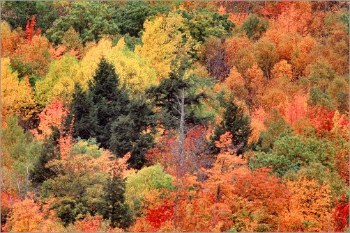 Fall Foliage Photography Tips