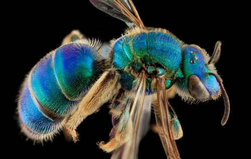 Intimate Portraits of Bees