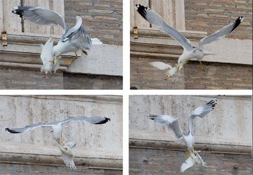 birdattack