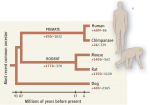 Throughout evolution, the gain (+) in the number of copies of some genes and the loss (–) of others have contributed to human- chimp differences.