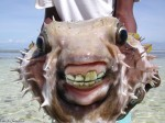 fishchoppers
