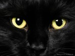 black-cat-with-green-eyes-wallpaper-3