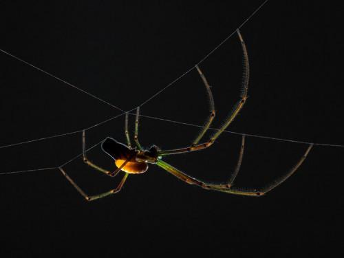 zombie-spider