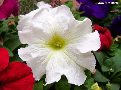 flowersvg