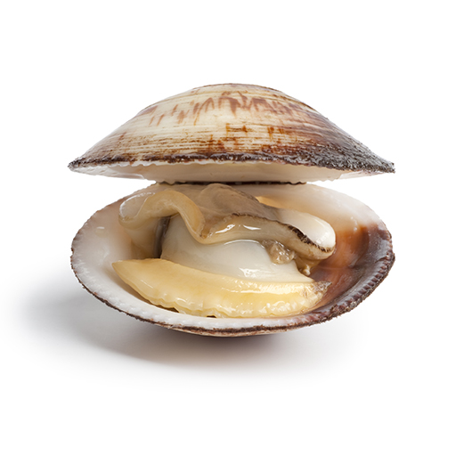 Transmissible clam leukemia? Awesome.