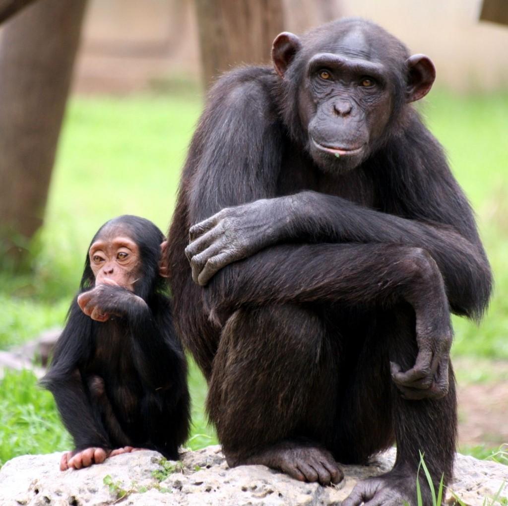 Chimpanze humanporn pics hentay film