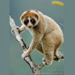 slowloris1