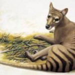 thylacine-loss-humans-responsible