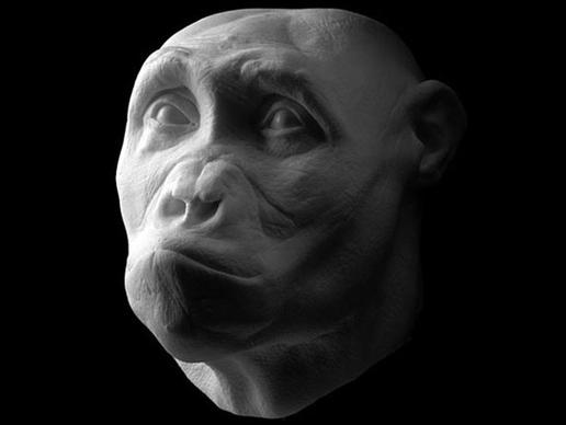storymaker-early-human-ancestors-faces0-515x388