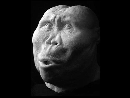 storymaker-early-human-ancestors-faces4-515x388