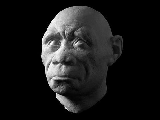 storymaker-early-human-ancestors-faces9-515x388