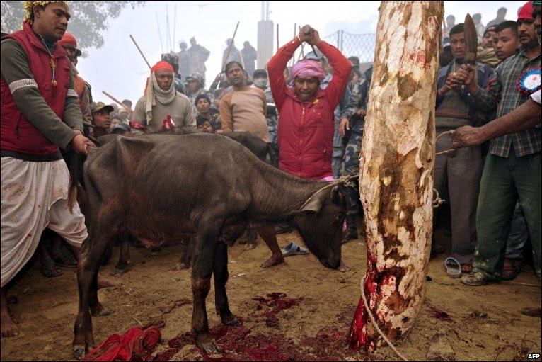 animal_sacrifice6