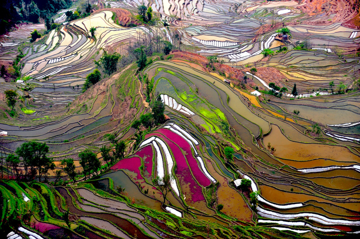 """""""Hani Terraces"""". Images courtesy of the artist."""