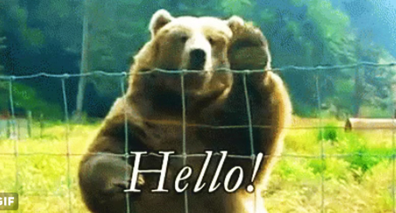 Waving Grizzly gif on Twitter.