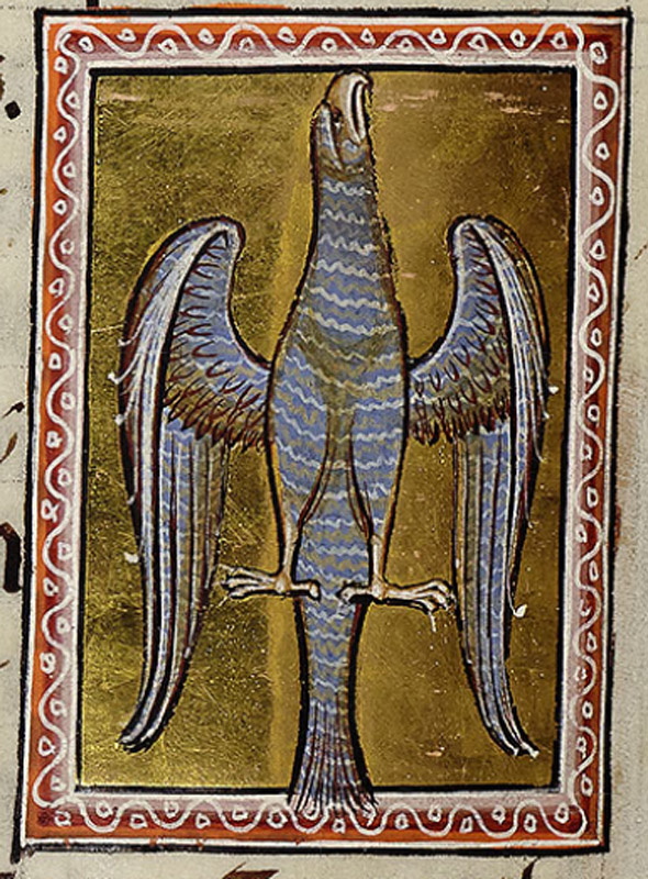 This spread-eagled bird is usually referred to as a hawk, preceding its chapter on ff.30r-30v. It may depict the hawk spreading its wings to the south wind to facilitate moulting. However it is placed next to a text referring the the devil uplifted on wings of pride. It might be alternatively an eagle (aquila), a pun on aquilo the north wind, and a tangible image for the invisible wind.