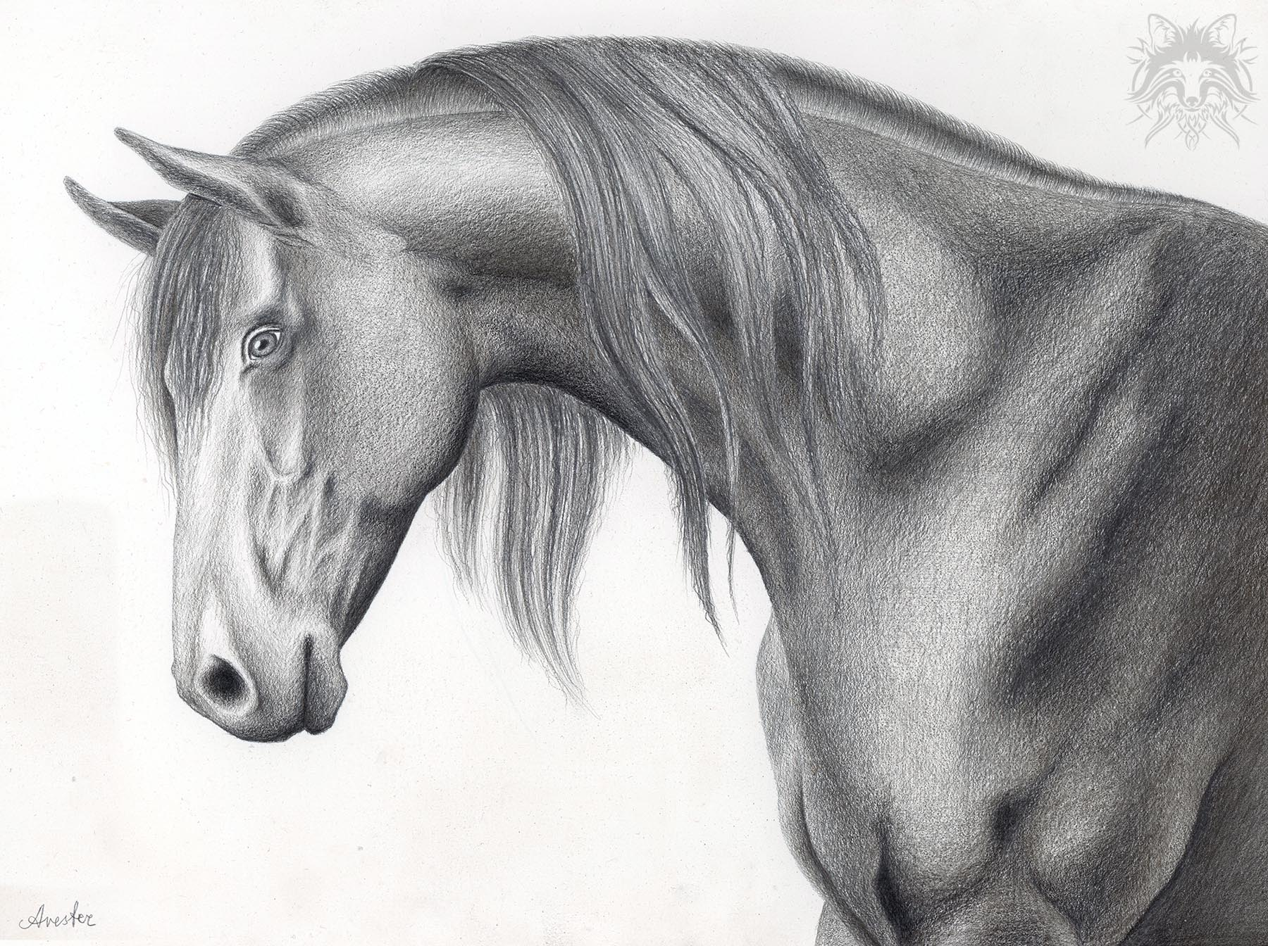 Metalpoint drawing of a horse head.