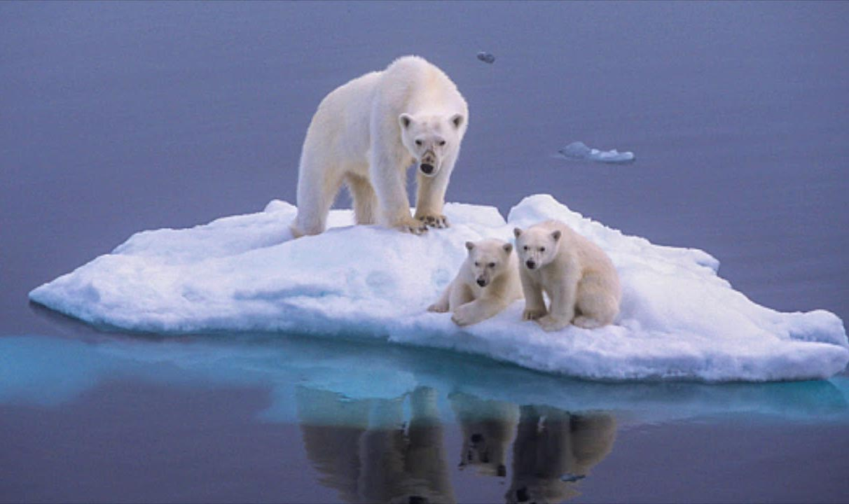 Polar bears on melting ice.