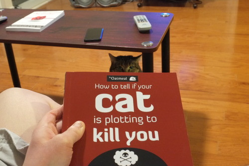 cat_kill_photo