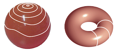 On the left, a loop on the surface of a sphere is reduced to a point. On the right, there is a loop around the surface of a donut.