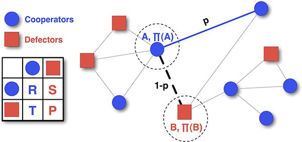 A network of cooperators and defectors