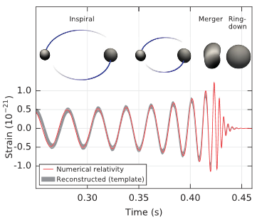 The three stages of a black hole merger are shown, along with the resulting strain. First, black holes spiral inwards, the strain oscillating with increasing amplitude and frequency. Then the black holes merge and have a ring-down, where the amplitude of strain decreases very quickly.