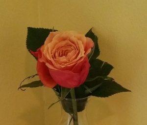 Rose in a bud vase