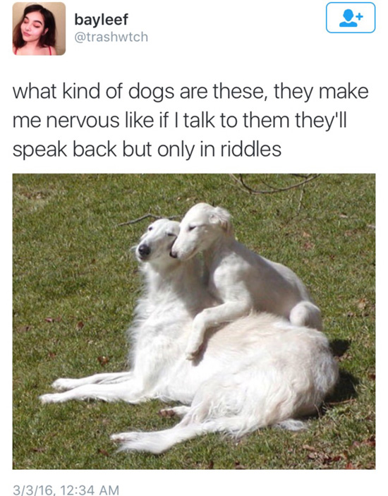 tweet by trashwtch of two pretty dogs with a funny caption