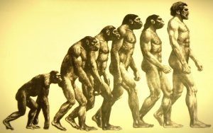 Backlit ink art of a series of apes through time, ending with a modern man.