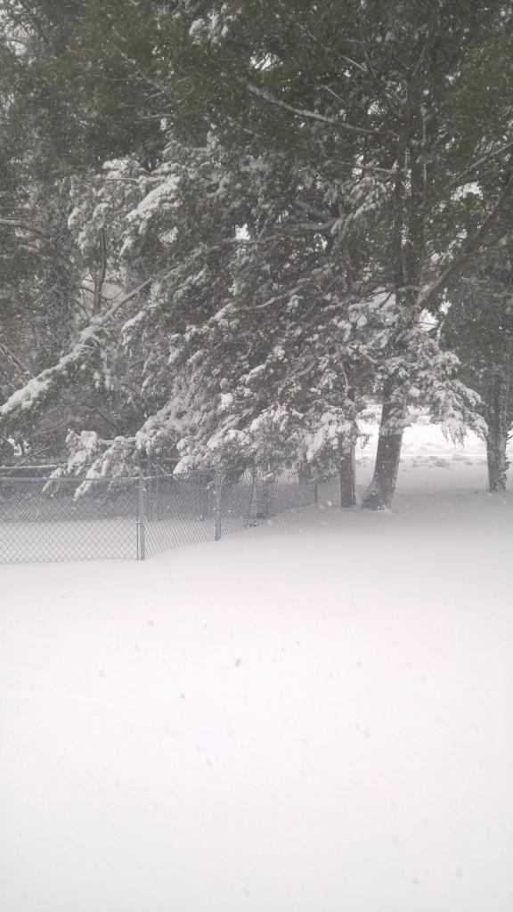 2017.02.09 - Snow on Long Island 2