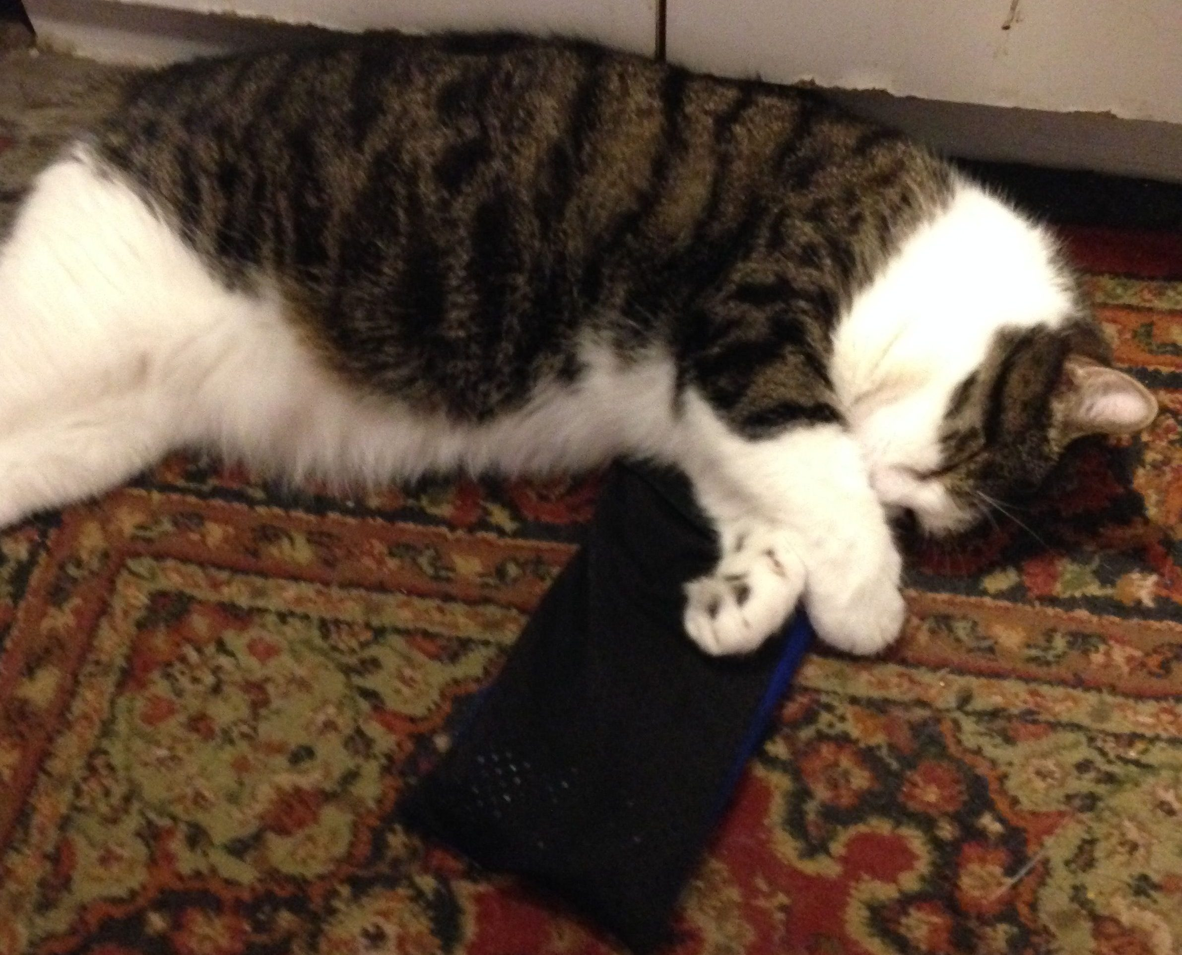 The picture shows His Holiness St. Ray the Cat snoozing with his paws on an ice pack. He is very cute and fuzzy.