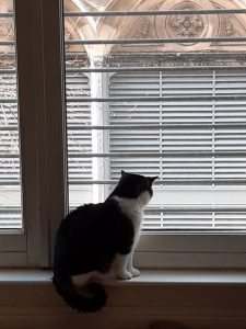 The picture shows my cat, St. Ray, looking out the window. He is a cat of solid build, with dark gray and black striped fur on his back, tail, and head. His muzzle, chest, legs, belly, and a collar on his shoulders are snowy white and very, very soft to the touch.He is at the bottom of a door-sized window, seated on the sill, with his tail hanging down in a neat curl. He's looking out at people who cannot be seen in the street below. Outside, parts of a tree are visible, buds still just barely starting to open for the spring. The building across the way has shuttered windows, below stone arches carved with leaves and flowers - I believe they are thistles.