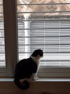 The picture shows my cat, St. Ray, looking out the window at a different angle. He is a cat of solid build, with dark gray and black striped fur on his back, tail, and head. His muzzle, chest, legs, belly, and a collar on his shoulders are snowy white and very, very soft to the touch. He is at the bottom of a door-sized window, seated on the sill, with his tail hanging down in a neat curl. He's looking out at people who cannot be seen in the street below. Outside, parts of a tree are visible, buds still just barely starting to open for the spring. The building across the way has shuttered windows, below stone arches carved with leaves and flowers - I believe they are thistles.
