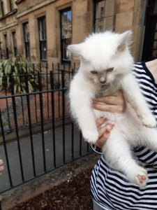 The image shows Banjo the kitten being held up by one of his humans. He's 8 weeks old, with fluffy white fur, and curious blue eyes. The human's shirt has horizontal black and white stripes. There are stone buildings in the background, with mulched yards in front, hemmed in by iron fencing.