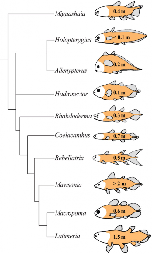 coelacanth_fossils