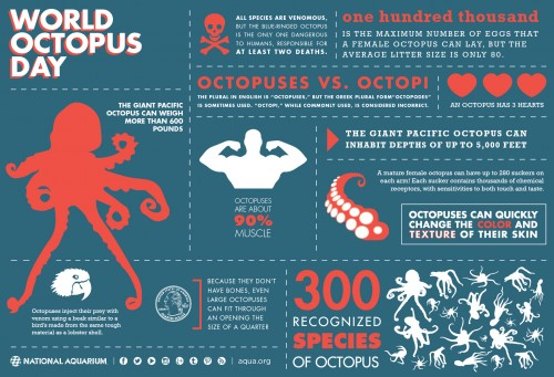 octopus_infographic