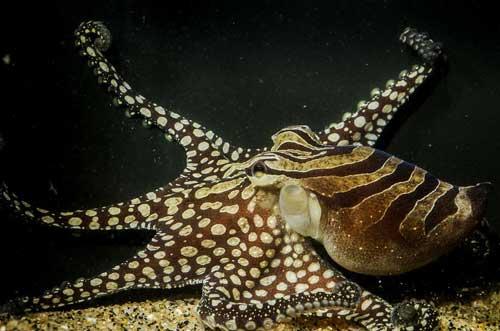 social-octopus_sm