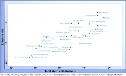 The relationship between the number of stem cell divisions in the lifetime of a given tissue and the lifetime risk of cancer in that tissue.
