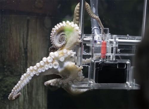 octopuscamera