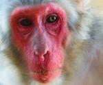 redfacemonkey