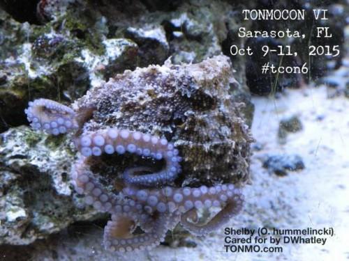 tonmocon