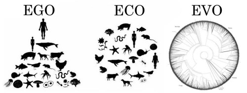 "I still see a lot of Ego in the Eco diagram, since humans are the only species (out of 1.8 million species that have been described on Earth) that are represented twice, and over half of the species shown in that diagram are vertebrates like us (even though only about 5% of all described species are vertebrates). I made this version to emphasize that there is a lot of biodiversity on Earth, and all species are connected through our evolutionary history to single common ancestor. The tree shown under ""EVO"" represents species approximately in proportion to their described diversity, and the circular shape emphasizes that we are all equally distant from our common ancestor."
