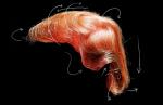 trumphair